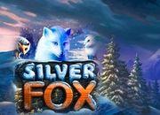 В игровом автомате Silver Fox (Песец) ждет удача