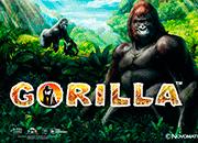 Игровой слот Gorilla: по следам африканских джунглей